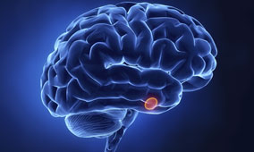 pituitary-gland-and-growth-hormone